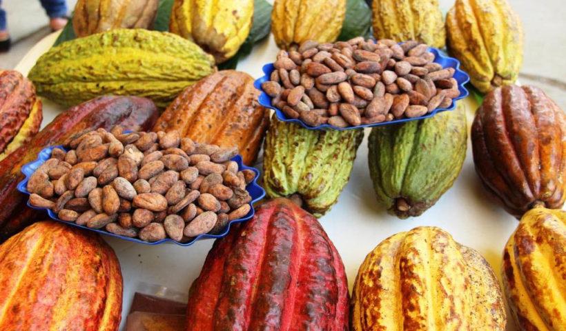 El destino más importante de las agroexportaciones peruanas (tradicionales y no tradicionales) fue EE.UU.