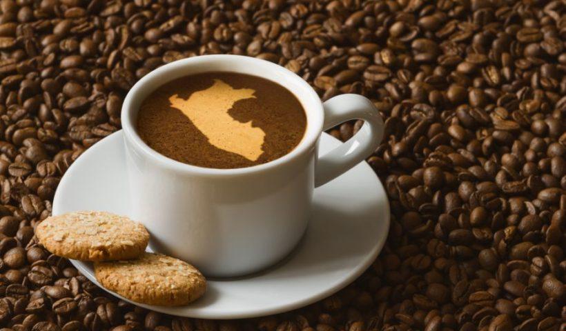 Los cafés peruanos se producen en 19 regiones de la selva alta de nuestro territorio, como San Martín, Junín, Cusco o Puno