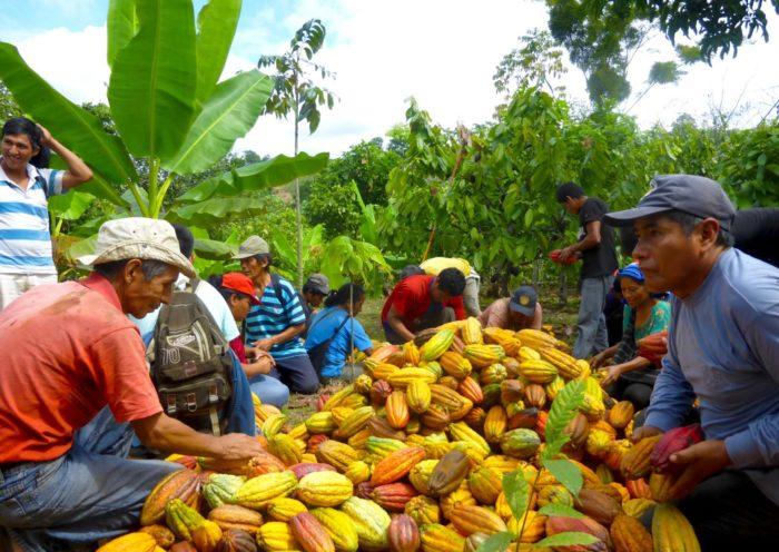 500 agricultores peruanospodrán ofrecer sus productos a través de este catálogo digital
