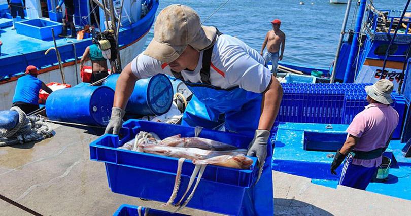 Pesca peruana para consumo humano