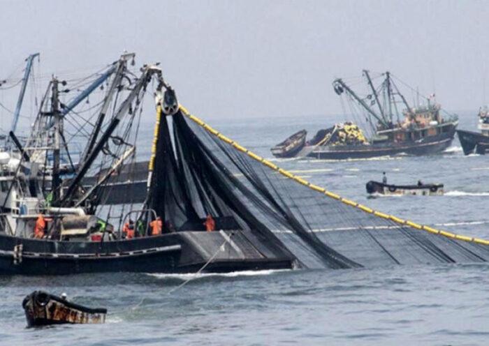 En junio de este año, la producción de la Pesca creció en 48,05% con respecto a similar mes del 2019, según el INIE