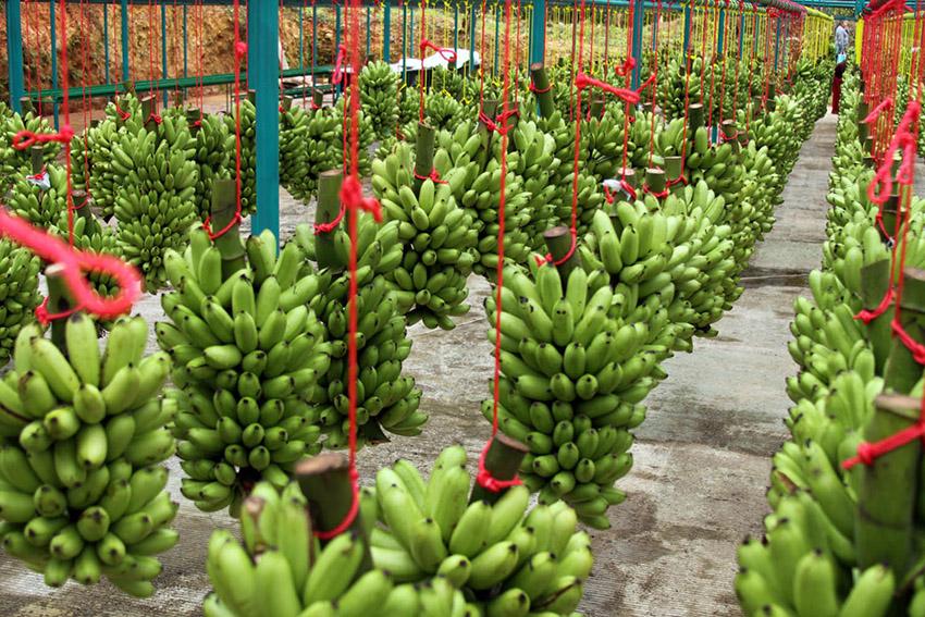 Sectores como la agroexportación en Perú supieron afrontar la coyuntura y mantener sus operaciones a pesar de la pandemia