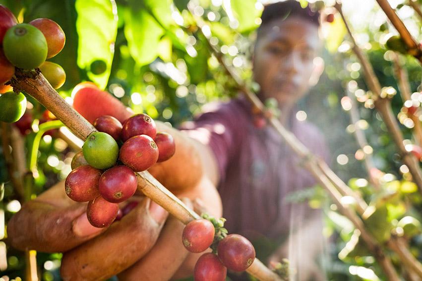 """Accor Sudamérica ampliará su programa """"Plant for The Planet"""" al departamento colombiano de Cauca."""