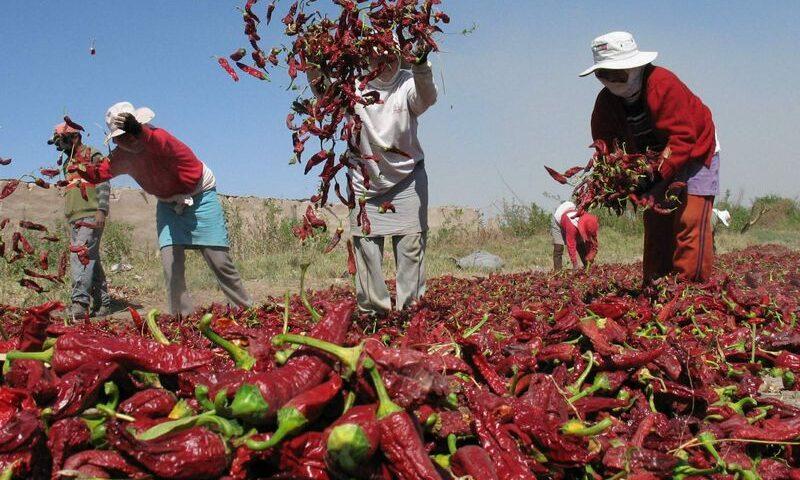 Conveagro sostuvo que la demora de préstamos del FAE-Agro pone en riesgo la seguridad alimentaria, y afecta a pequeños productores