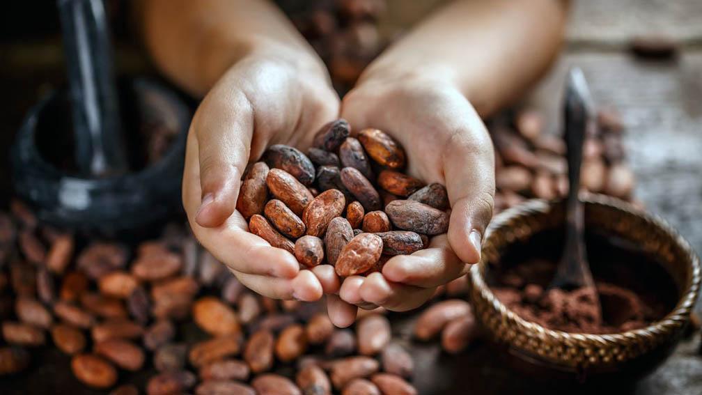 """Lanzan chocolate """"Eshpe"""" y """"Koyanesha"""", elaborados con cacao de la Reserva Comunal Yanesha en Oxapampa"""