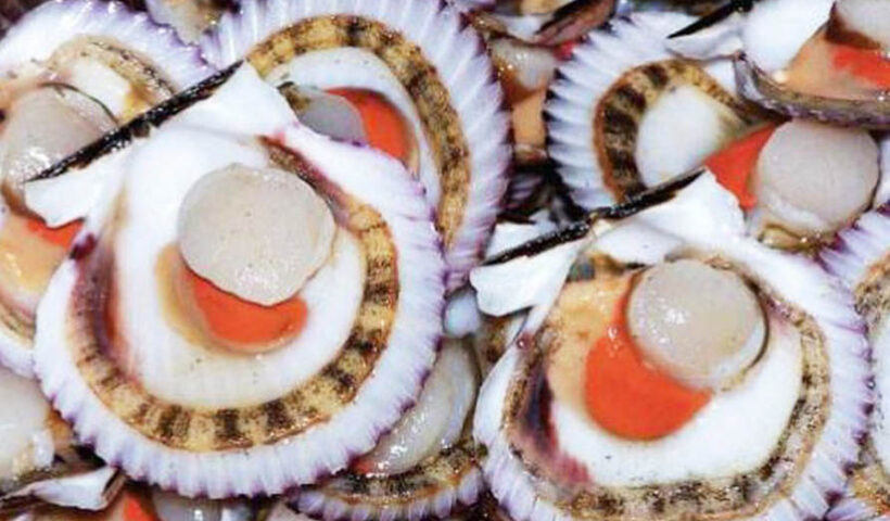 El Instituto del Mar del Perú (Imarpe) iniciará hoy el monitoreo biológico-poblacional del recurso concha de abanico (Argopecten purpuratus)