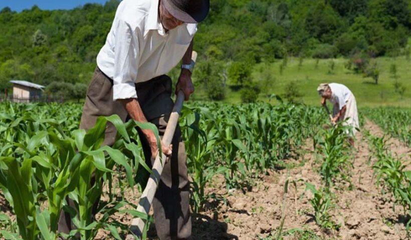 Oficializan la creación del Ministerio de Desarrollo Agrario y Riego