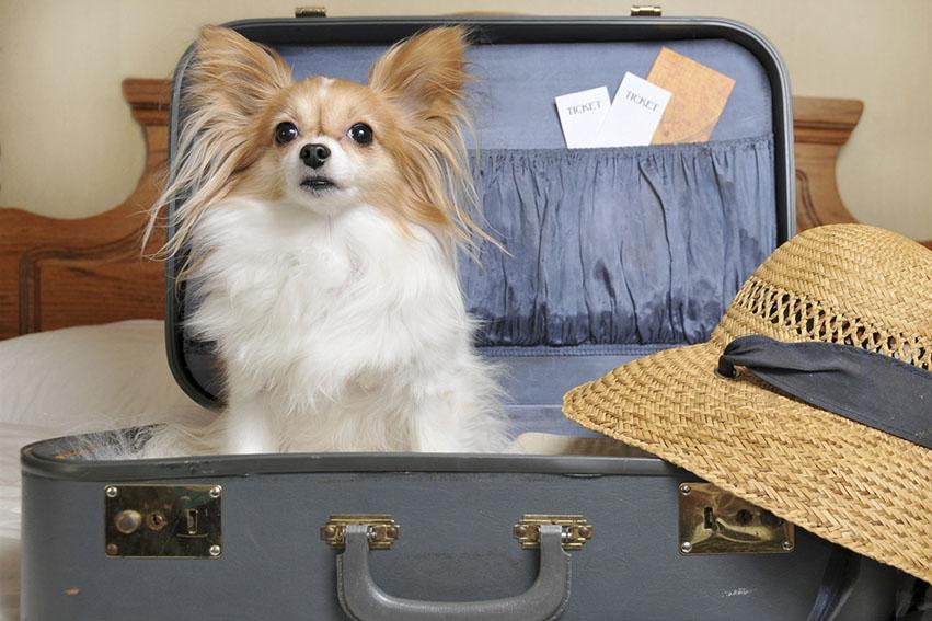 Si te gustaría darte unas pequeñas vacaciones con tu mascota, aquí te presentamos 7 hotelespet friendlypara unos días de relax.