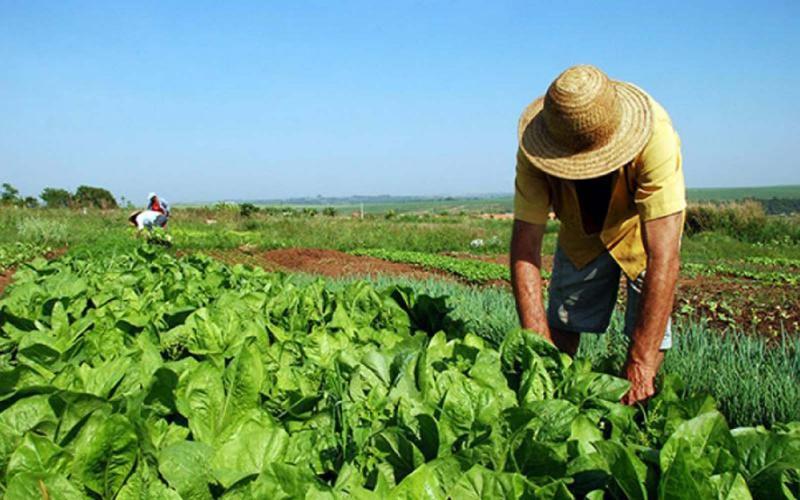 Ley de Promoción Agraria: ¿Qué le espera a la agroexportación?