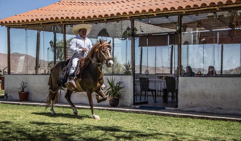 Declaran Patrimonio Cultural de la Nación a los conocimientos del Chalán para crianza del Caballo Peruano de Paso