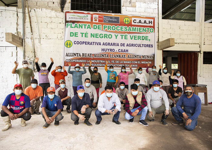 Cusco: Agricultores industrializaron su producción de té y exportarán a Estados Unidos