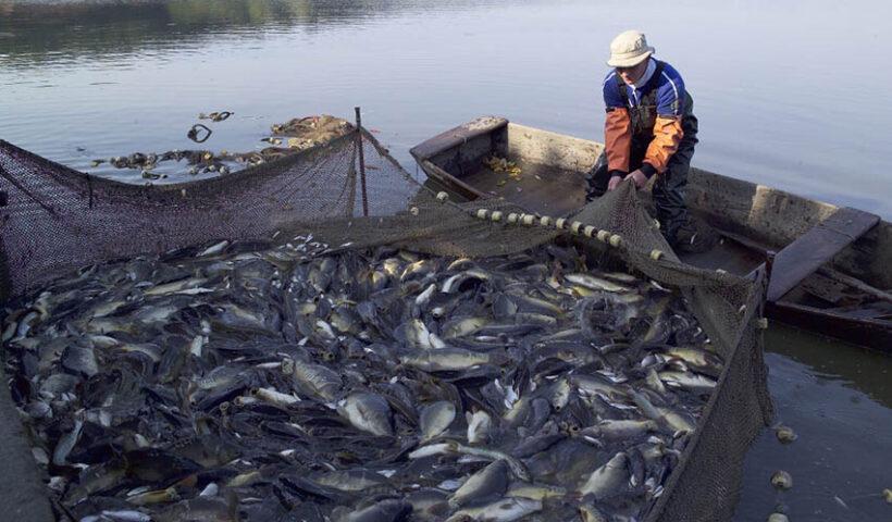 Identifican oportunidades para pesca no tradicional en Europa y Asia