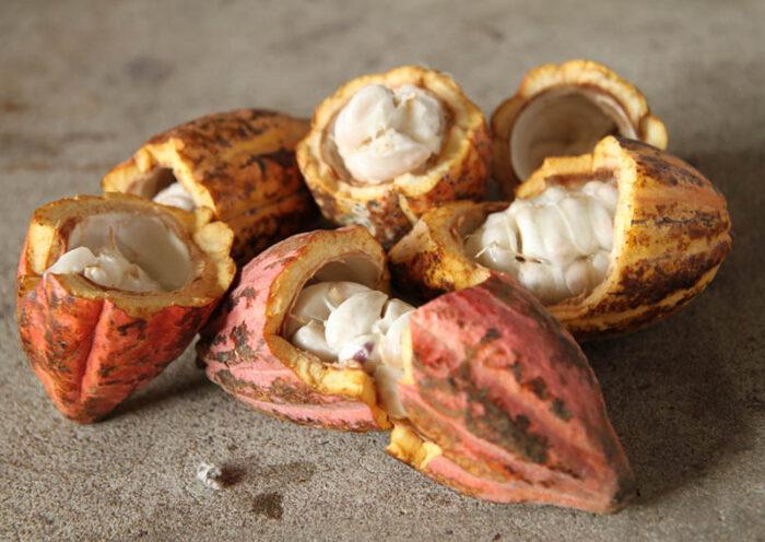 Puratos Perú impulsa Cacao-Trace, programa sustentable de chocolate