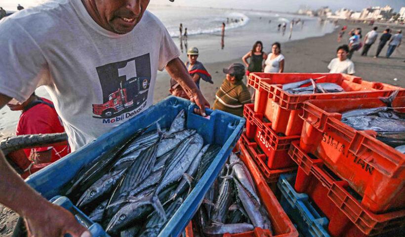 Ejecutivo aprueba proyecto de ley para elevar consumo de pescado y mariscos