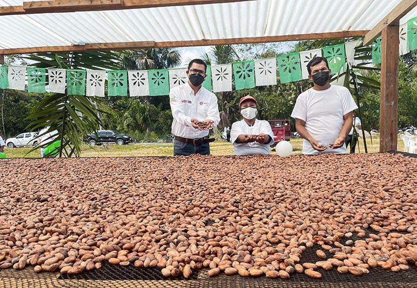 MIDAGRI impulsa comercio de cacao en la selva central