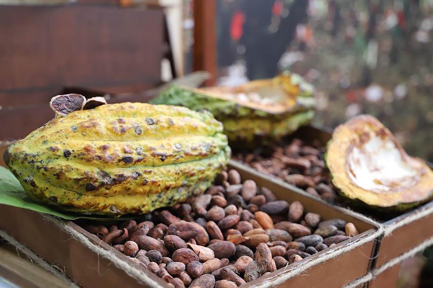 Exportación de cacao y sus derivados superó los US$ 150 millones